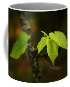 Close Up Of Leaves In Forest Coffee Mug