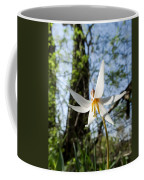 Close-up Of White Trout Lily Coffee Mug