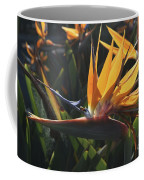 Close Up Photo Of A Bee On A Bird Of Paradise Flower  Coffee Mug