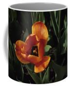 Close View Of A Tulip Coffee Mug
