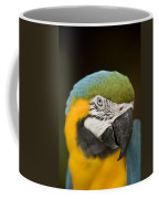 Closeup Of A Captive Blue-and-yellow Coffee Mug