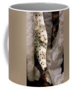 Closeup Of A Cleaner Shrimp Lysmata Coffee Mug