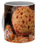 Closeup Of A Colorful Cushion Star Coffee Mug