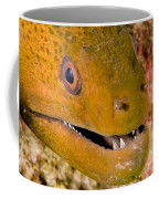 Closeup Of A Giant Moray Eel Coffee Mug