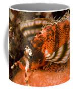 Closeup Of An Ocellated Lionfish Coffee Mug