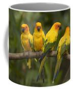 Closeup Of Four Captive Sun Parakeets Coffee Mug