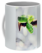 Closeup Of Poisonous Green Snake With Yellow Eyes - Vogels Pit Viper  Coffee Mug