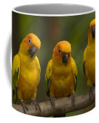 Closeup Of Three Captive Sun Parakeets Coffee Mug