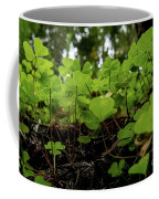 Clover In Montgomery Woods State Natural Reserve Coffee Mug