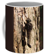 Club Tailed Robber Fly Coffee Mug