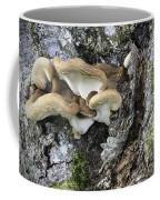 Cluster Of Fungi Coffee Mug
