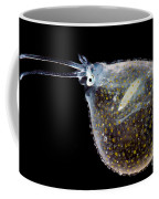 Cockatoo Squid Coffee Mug