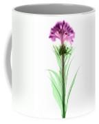 Cockscombs Flower, X-ray Coffee Mug