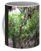 Cocoa Tree With Ripe Cocoa Pods Coffee Mug