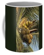 Coconuts Cluster At Los Tules Resort Coffee Mug