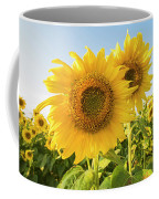 Colby Farms Sunflower Field Closeup Coffee Mug