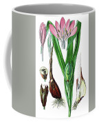 Colchicum Autumnale, Commonly Known As Autumn Crocus, Meadow Saf Coffee Mug