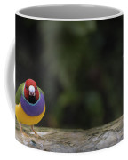 Colorful Guilian Finch And The Plain Bird Coffee Mug