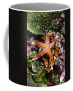 Colorful Seastar Laying On Cean Reef Coffee Mug by James Forte