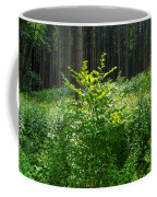 Colors Of A Forest In Vogelsberg Coffee Mug