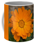 Colourful Orange Signet Marigold  Coffee Mug