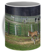 Colt Play With Hay Coffee Mug