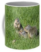 Columbian Ground Squirrels Coffee Mug