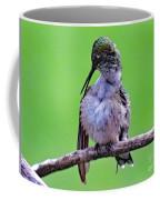 Combing His Feathers - Ruby-throated Hummingbird Coffee Mug