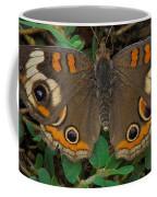 Common Buckeye Coffee Mug