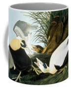 Common Eider, Eider Duck Coffee Mug
