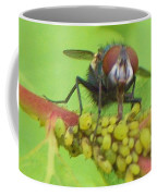 Common Fly Licking Up Aphid Nectar     May         Indiana    Coffee Mug