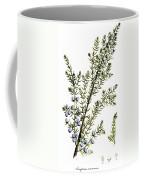 Common Juniper Alchemy Plant Coffee Mug