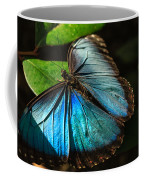 Common Morpho Blue Butterfly Coffee Mug