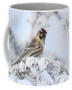Common Redpoll - Hello Coffee Mug