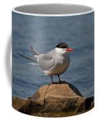 Common Tern... Coffee Mug by Nina Stavlund