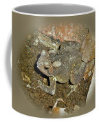 Common Toad - Bufo Americanus Coffee Mug