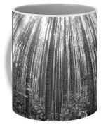 Cook Pines Coffee Mug