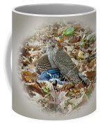 Cooper's Hawk - Accipiter Cooperii - With Blue Jay Coffee Mug