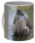 Cooper's Hawk In Stream Coffee Mug