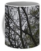 Cooper's Hawk Perched In Tree Coffee Mug