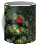 Coral Hawkfish Hiding In Coral Coffee Mug by James Forte