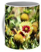 Coreopsis Tickseed Coffee Mug