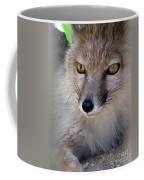 Corsac Fox- Vulpes Corsac 03 Coffee Mug