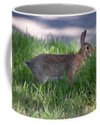 Cottontail Rabbit In My Front Yard Coffee Mug
