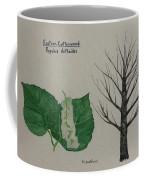 Cottonwood Tree Id Coffee Mug