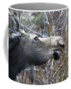 Cow Moose Dining On Willow Coffee Mug
