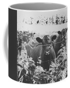 Cows In Black And White Coffee Mug