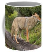 Coyote On A Log Closeup Coffee Mug