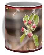 Crab Apple Buds Coffee Mug