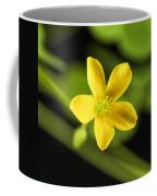 Creeping Woodsorrel Square Coffee Mug